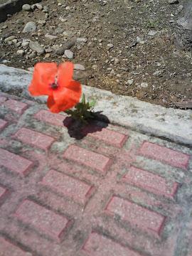 La naturaleza avanza y se hace camino hasta en el duro cemento... =)