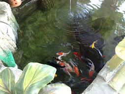 golf fish