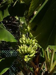 pisang hotel