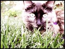 THE CAT :)