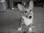 Baby Sammy