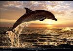 LIFE UNDER SEA....