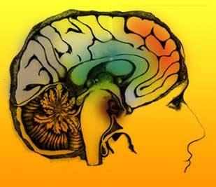 PNL Programacion Neuro Linguistica Logo+pnl
