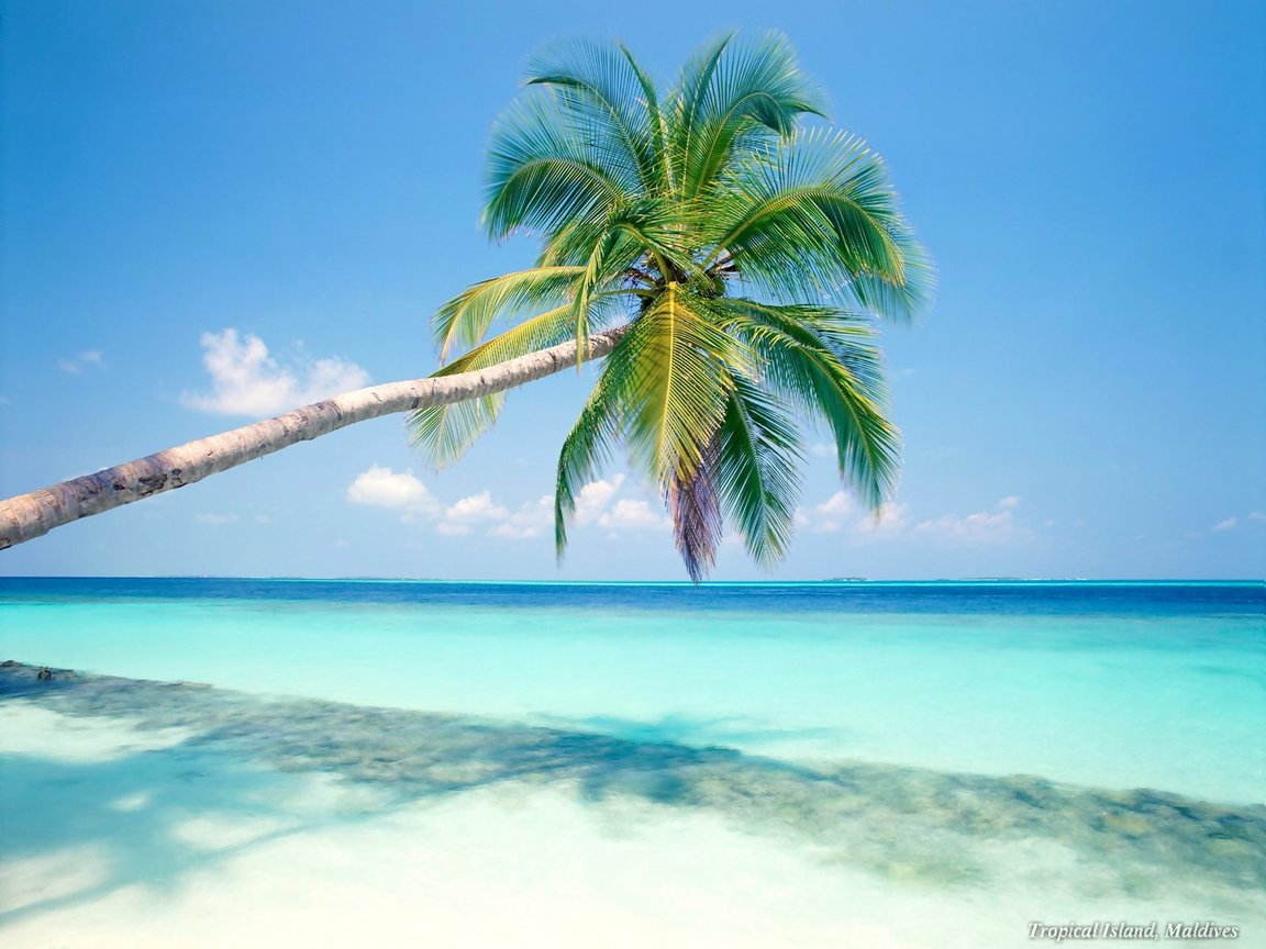 cool caribbean beach wallpaper | beach wallpaper backgrounds