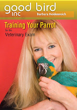 Training your Parrot for the Veterinary Exam