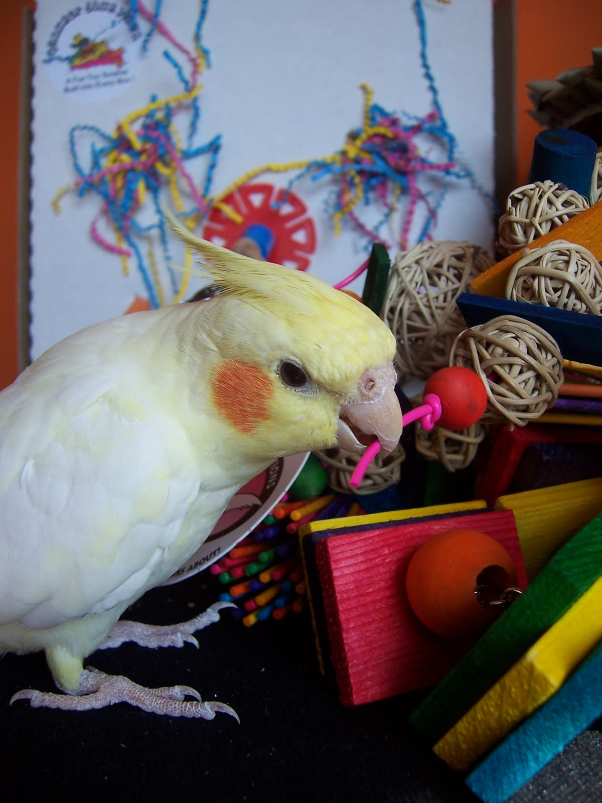 Bird Enrichment Toys : Barbara s force free animal training talk enrichment