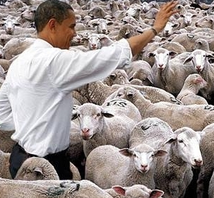 [Image: obama+sheep.jpg]