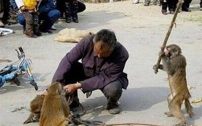 Monyet Vs Manusia Ups+busyet+6