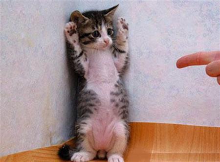 http://3.bp.blogspot.com/_ahIy1udbZ9M/SKCKiWavZ9I/AAAAAAAAAJk/5OA_UFA72Sk/S660/cute+kitten.jpg