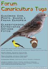 Forum Canaricultura Tuga