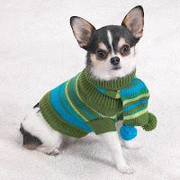 собачка в свитере