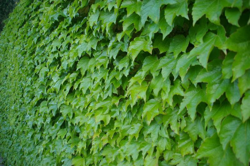 Las plantas y t enero 2011 - Plantas para vallas ...