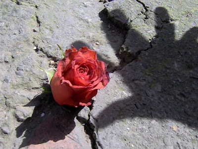 http://3.bp.blogspot.com/_aiXjnFJXNMg/TElL2XpKL_I/AAAAAAAAAEA/-SJfdkqTxb8/s1600/Betweeen_the_Concrete_by_Kuhkay.jpg