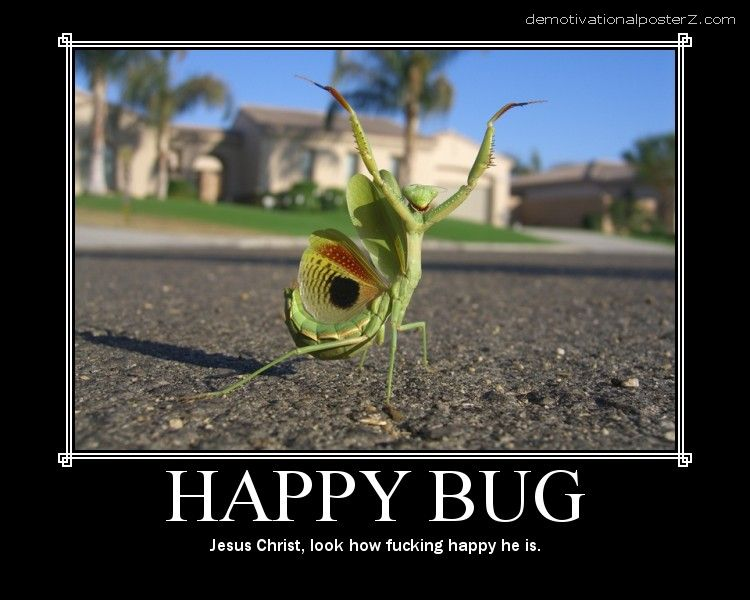 happy bug motivational poster