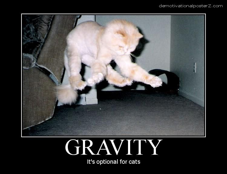 funny motivational posters for office. Gravity - It\u0027s Optional For Cats Funny Motivational Posters Office