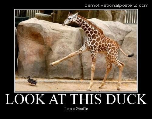 giraffe showing duck