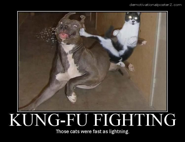 cat kicks dog
