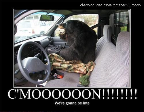 bear in car
