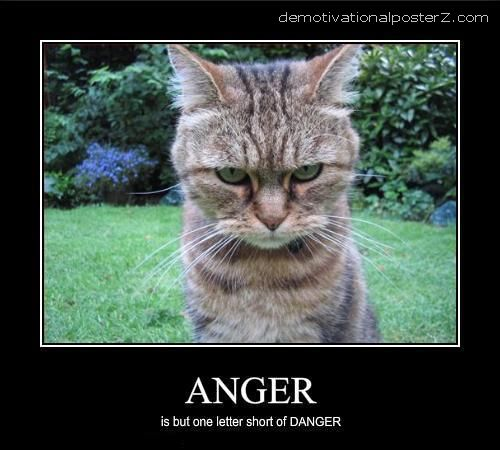 angry cat motivational