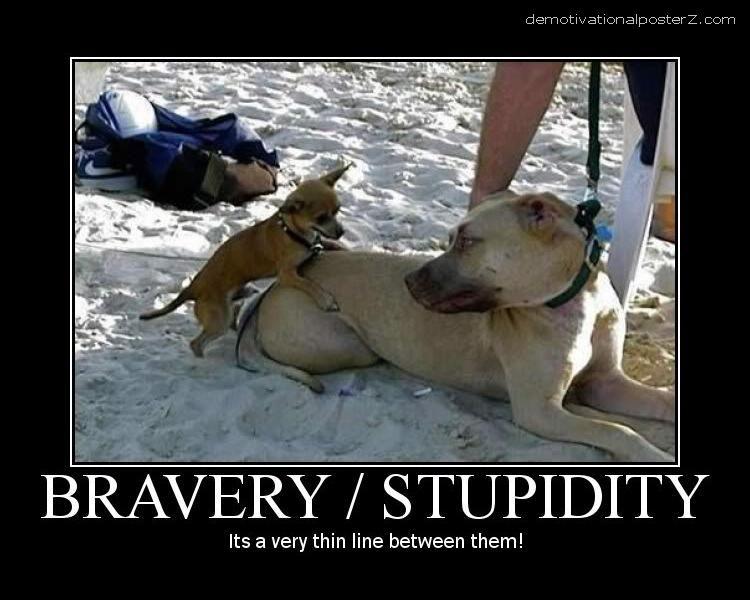 bravery stupidity thin line