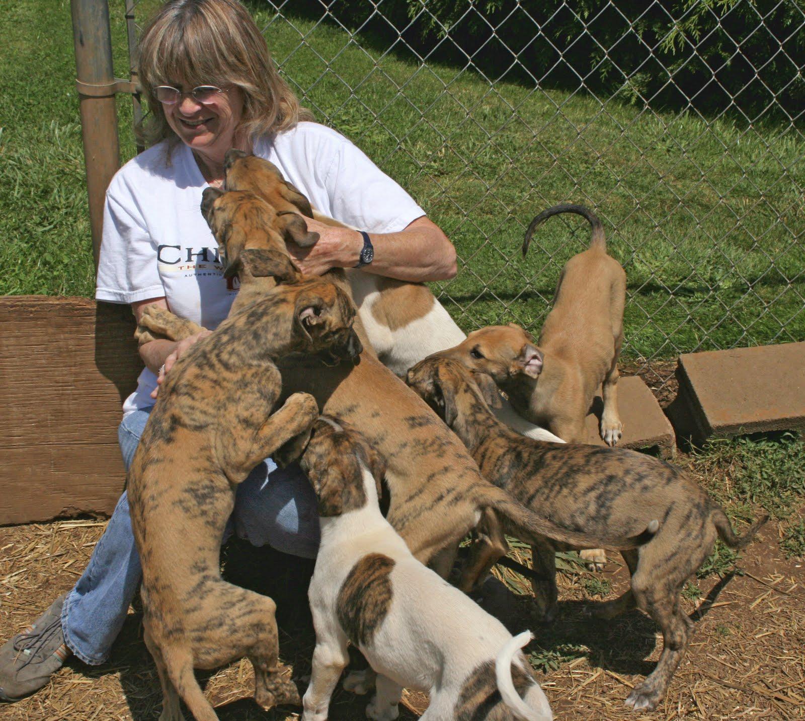 Oregon Greyhound Adoption Hound Chatter: PUPPIES GROW UP