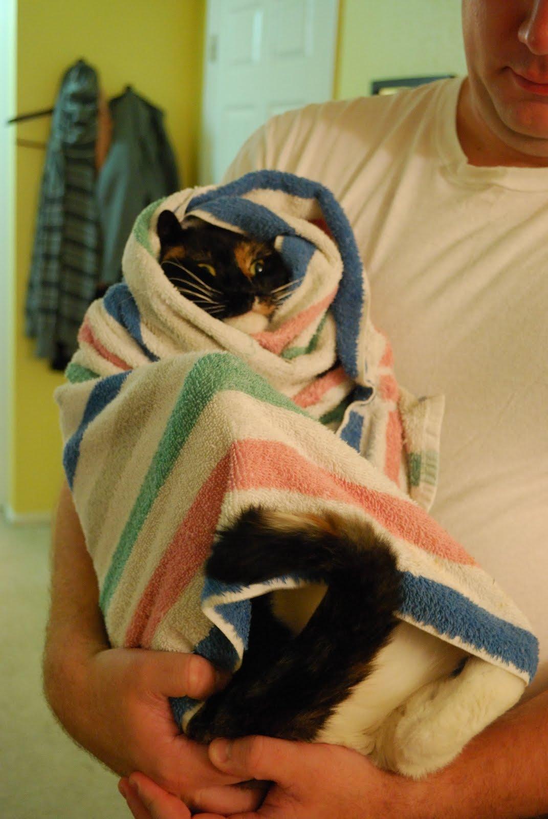 [Kitty+Burrito_2.JPG]
