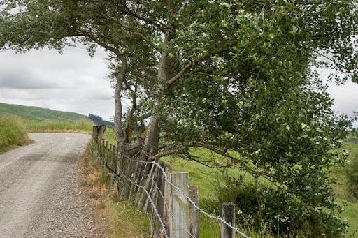 No. 2 Line, Pohangina Valley