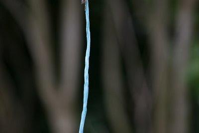 Blue baler twine
