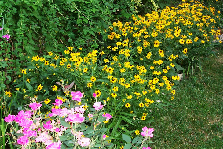 Blackeyed Susans and roses