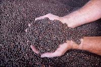 black seed herb