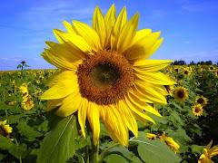 Exuberância das flores!