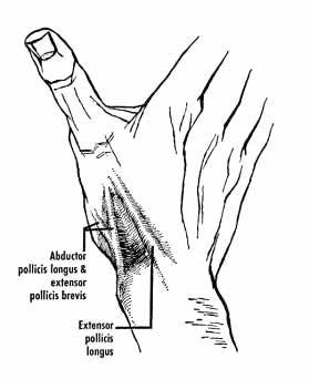 Tabatière anatomique