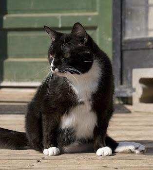 Vincent D. Cat