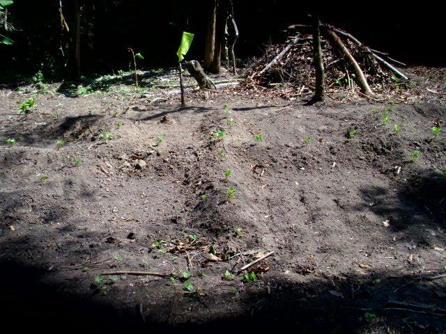 empezando una huerta en permacultura