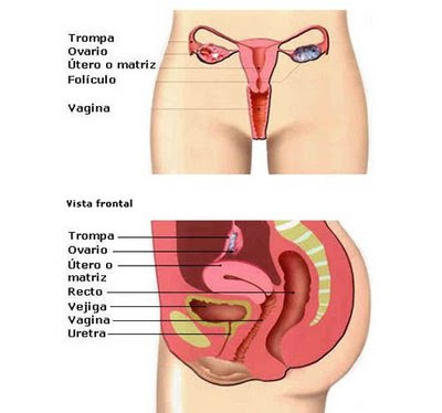 Los efectos secundarios de las drogas de agrandamiento del pene