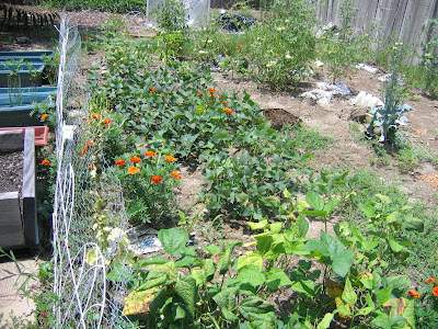 July 2008 - Beans and Marigolds