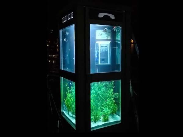 Telephone Booth Aquarium 6pics Curious Funny Photos