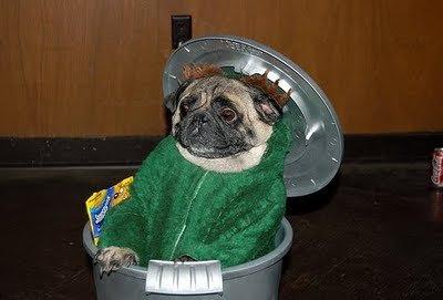 dog in costume