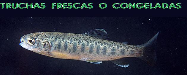 Trucha - Peces Ornamentales