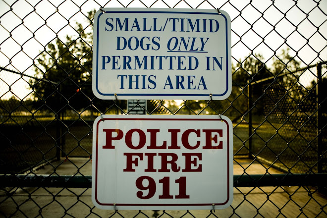 Small/timid dogs only permitted...
