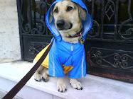 Un perro de catalogo