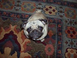 Jane the Pug