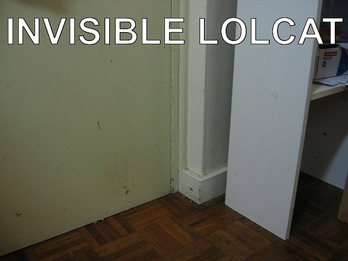 The+Invisible+LOLCat.jpg