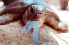 Τελος οι  πλαστικες σακουλες στη Μυκονο - Υπογραφω την  πρωτοβουλία