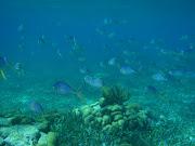 Finding Nemo (belize snorkling )
