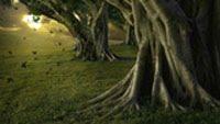 Download Kumpulan DreamScene Menarik