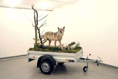 Lobo disecado