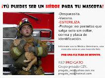 Tú puedes ser el HEROE de tu mascota