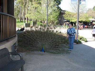 viv & bird - matt