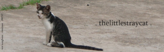 thelittlestraycat